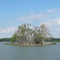 Insel Kietzwerder auf der Lieps